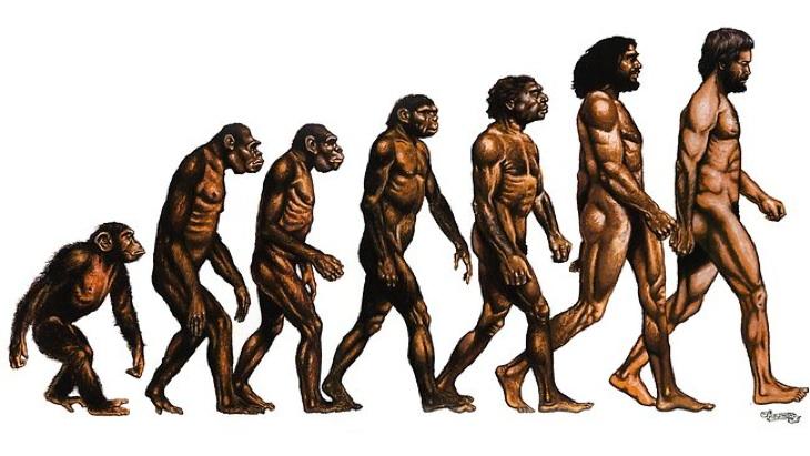 """Résultat de recherche d'images pour """"image evolution homo sapiens"""""""